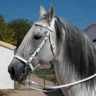 White Jerezana style bridle, with mosquero and throat lash